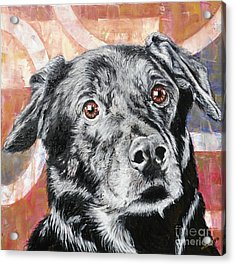Bailey Acrylic Print by PainterArtist FINs husband Maestro