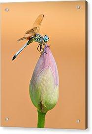 Balance Of Nature Acrylic Print