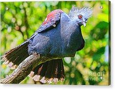 Balanced Pigeon Acrylic Print