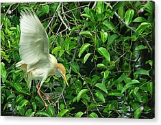 Acrylic Print featuring the photograph Balancing Act by Dennis Baswell