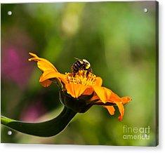 Balancing Bumblebee Acrylic Print
