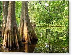Bald Cypress In Summer Green - Texas Acrylic Print by Ellie Teramoto