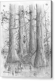 Bald Cypress Acrylic Print