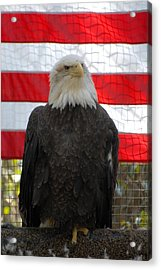 Bald Eagle 265 Acrylic Print by Joyce StJames