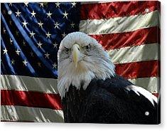 Bald Eagle 321 Acrylic Print