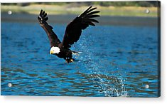 Acrylic Print featuring the photograph Bald Eagle Fishing by Don Schwartz