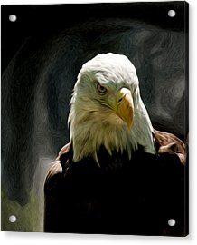Bald Eagle Giving You That Eye Acrylic Print