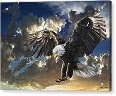 Bald Eagle Haliaeetus Leucocephalus Acrylic Print by Owen Bell