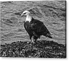 Acrylic Print featuring the photograph Bald Eagle In Black And White by Timothy Latta