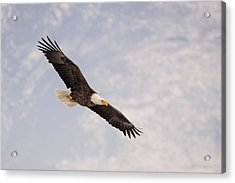 Acrylic Print featuring the photograph Bald Eagle In Full Extension by Jeremy Farnsworth