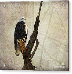 Bald Eagle Keeping Watch In Illinois Acrylic Print by Luther Fine Art