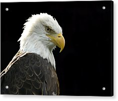 Bald Eagle Acrylic Print by Larry Bohlin
