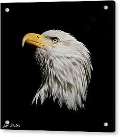 Bald Eagle Looking Skyward Acrylic Print