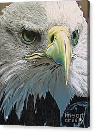 Sold Bald Eagle Acrylic Print