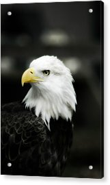 Acrylic Print featuring the photograph Bald Eagle by Peggy Franz