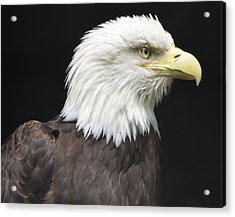 Bald Eagle Profile 2 Acrylic Print by Richard Bryce and Family