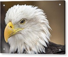 Acrylic Print featuring the photograph Bald Eagle by Robert  Aycock