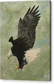 Acrylic Print featuring the painting Bald Eagle by Stan Tenney