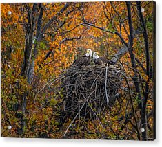 Bald Eagles Nest In Fall Acrylic Print