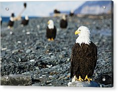 Bald Eagles Standing On The Shore Acrylic Print