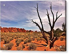 Bald Tree At Arches  Acrylic Print by Benjamin Yeager
