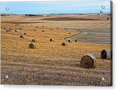 Bales Of Hay Acrylic Print