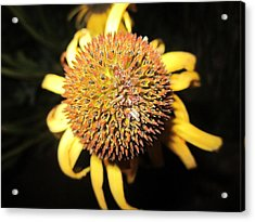 Ball Of Beauty Acrylic Print by Mike Podhorzer