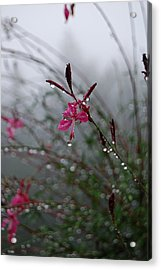 Acrylic Print featuring the photograph Hope - A Loss Is Not The End by Jani Freimann