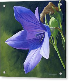 Balloon Flower Acrylic Print