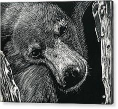 Baloo Acrylic Print