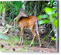 Bambi In The Brush Acrylic Print by Carey Chen