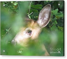 Bambi In The Woods Acrylic Print by David Lankton