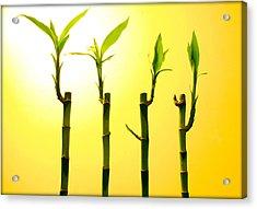 Bambo Acrylic Print by Mechi