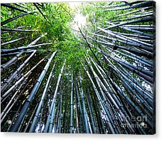 Bamboo . A Renewable Resource Acrylic Print by Renee Trenholm