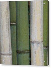Bamboo 1 Acrylic Print