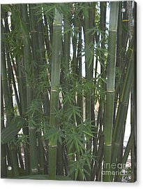 Bamboo 3 Acrylic Print by To-Tam Gerwe