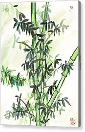 Bamboo Acrylic Print by Amberlyn How
