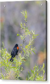 Bamboo And Bird Acrylic Print