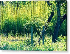 Bamboo Background Acrylic Print by Gary Richards