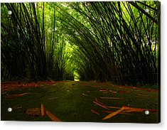 Bamboo Cathedral Acrylic Print by Dexter Browne