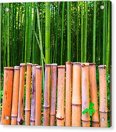 Acrylic Print featuring the photograph Bamboo Fence by Julia Ivanovna Willhite