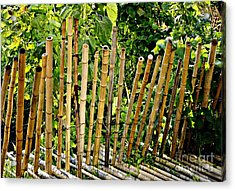 Bamboo Fencing Acrylic Print by Lilliana Mendez