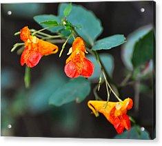 Bamboo Flowers Acrylic Print