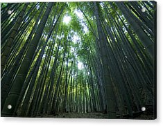 Bamboo Forest Acrylic Print by Aaron Bedell