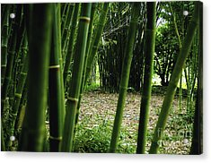 Bamboo Forest Acrylic Print by Andres LaBrada