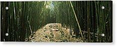 Bamboo Forest, Hana Coast, Maui Acrylic Print