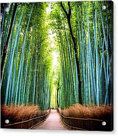 Bamboo Forest Acrylic Print by James Kang / Eyeem