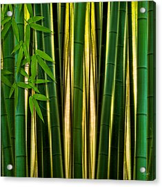 Bamboo Forest- Bamboo Artwork Acrylic Print by Lourry Legarde