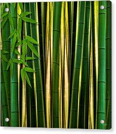 Bamboo Forest- Bamboo Artwork Acrylic Print