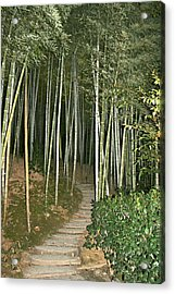 Bamboo Forest Pathway Acrylic Print